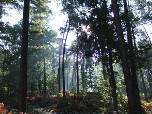 In den Elsen Reichswald zomer