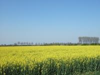 In den Elsen Uitzicht voorjaar