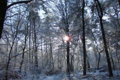 In den Elsen Reichswald winter