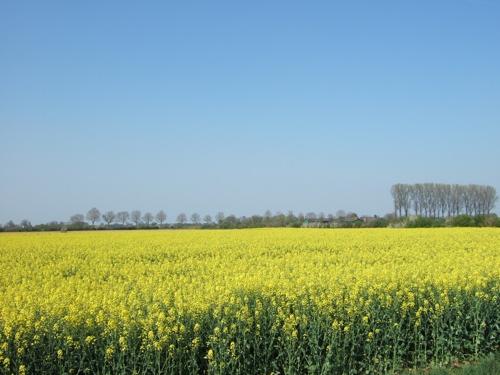 Uitzicht voorjaar